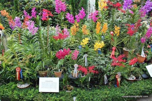 Orchids 22
