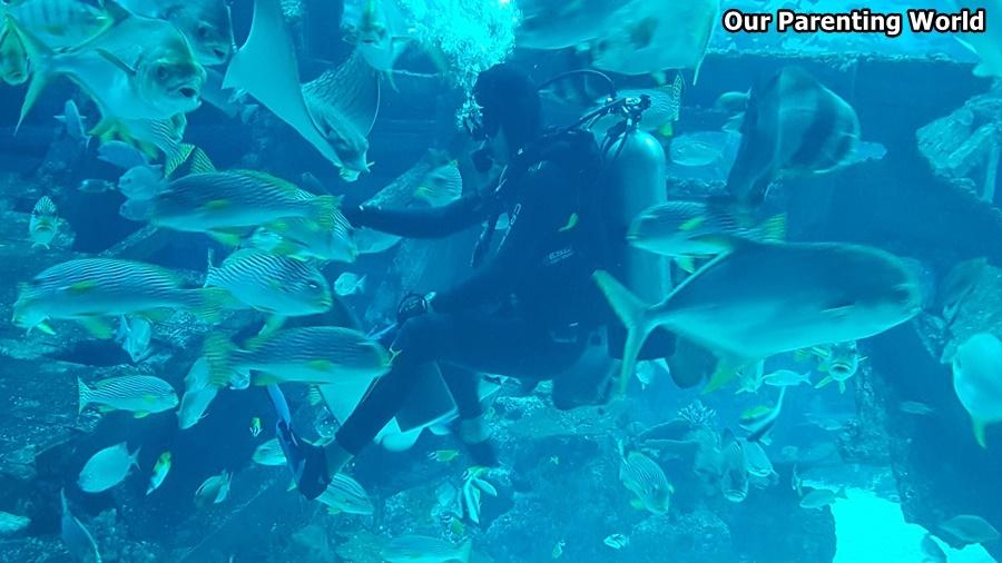 Merry Fishmas S.E.A. Aquarium 1