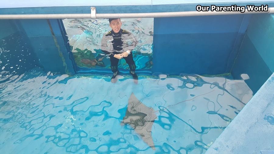 Merry Fishmas S.E.A. Aquarium 6