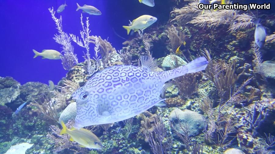 Merry Fishmas S.E.A. Aquarium 9